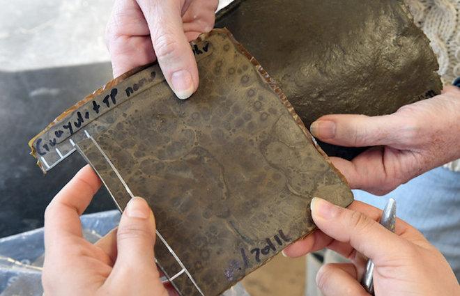 aHR0cDovL3d3dy5saXZlc2NpZW5jZS5jb20vaW1hZ2VzL2kvMDAwLzA5MC81Mzcvb3JpZ2luYWwvdHVybmluZy1mb29kLXdhc3RlLWludG8tdGlyZXMuanBlZw - Driving on Eggshells: Researchers Turn Food Waste into Tires