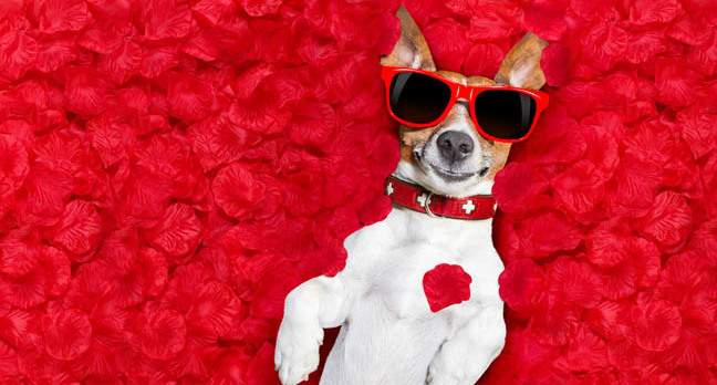 jack russell in love photo via shutterstock - The pain in your chest? That'll be Big Tech's AI arrow of love